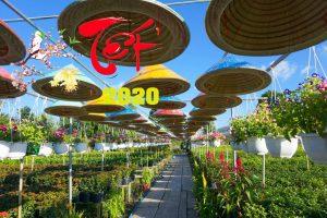 TOUR CAO LÃNH- SA ĐÉC 2N1Đ TẾT CANH TÝ 2020