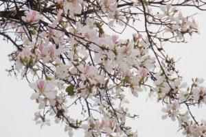 Tháng 4 – Tháng Của Những Mùa Hoa Đẹp Đến Nao Lòng